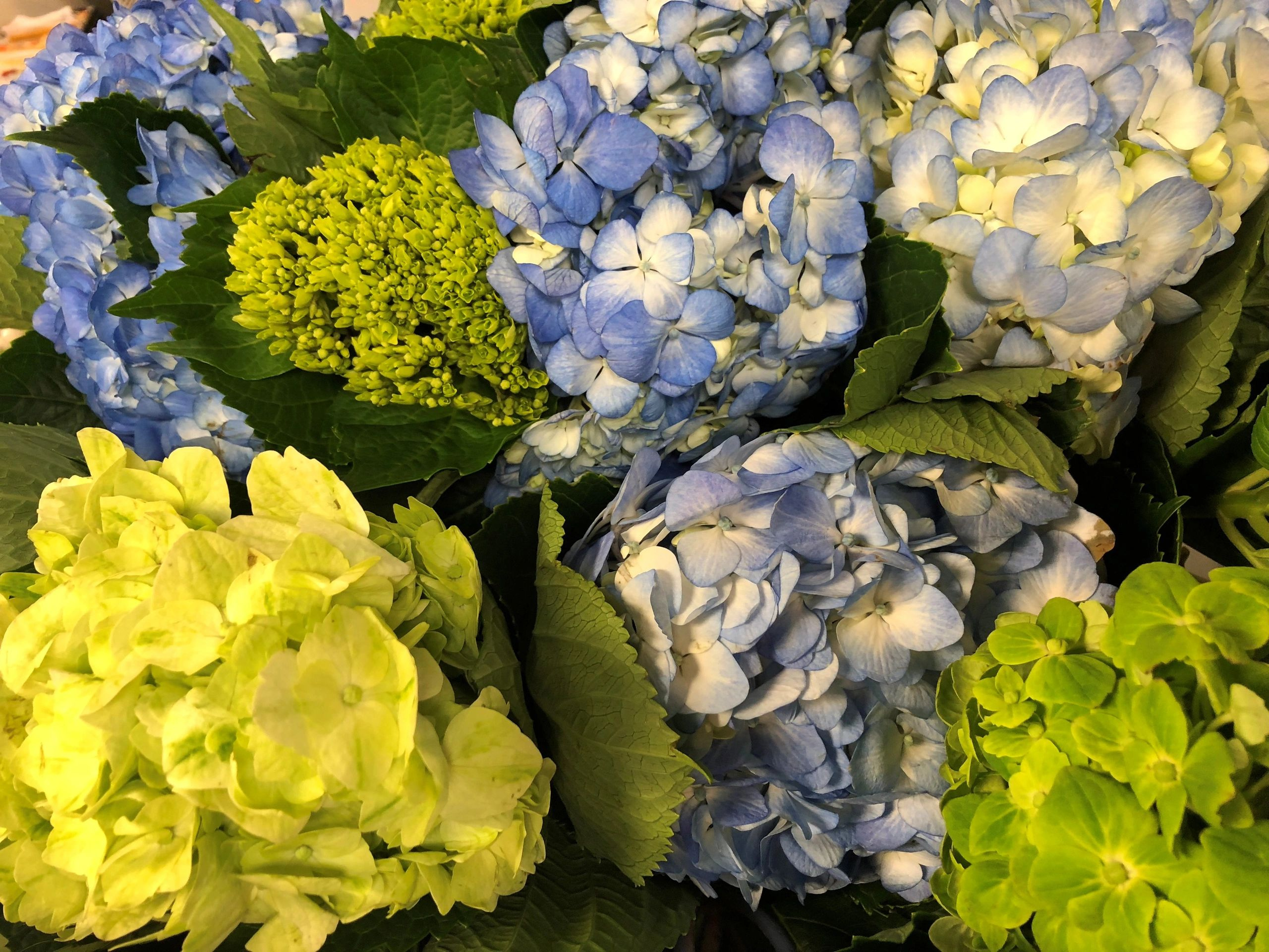 Established Wholesale/Retail Florist