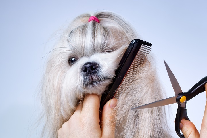 20-YEAR-OLD PET GROOMING South Tampa