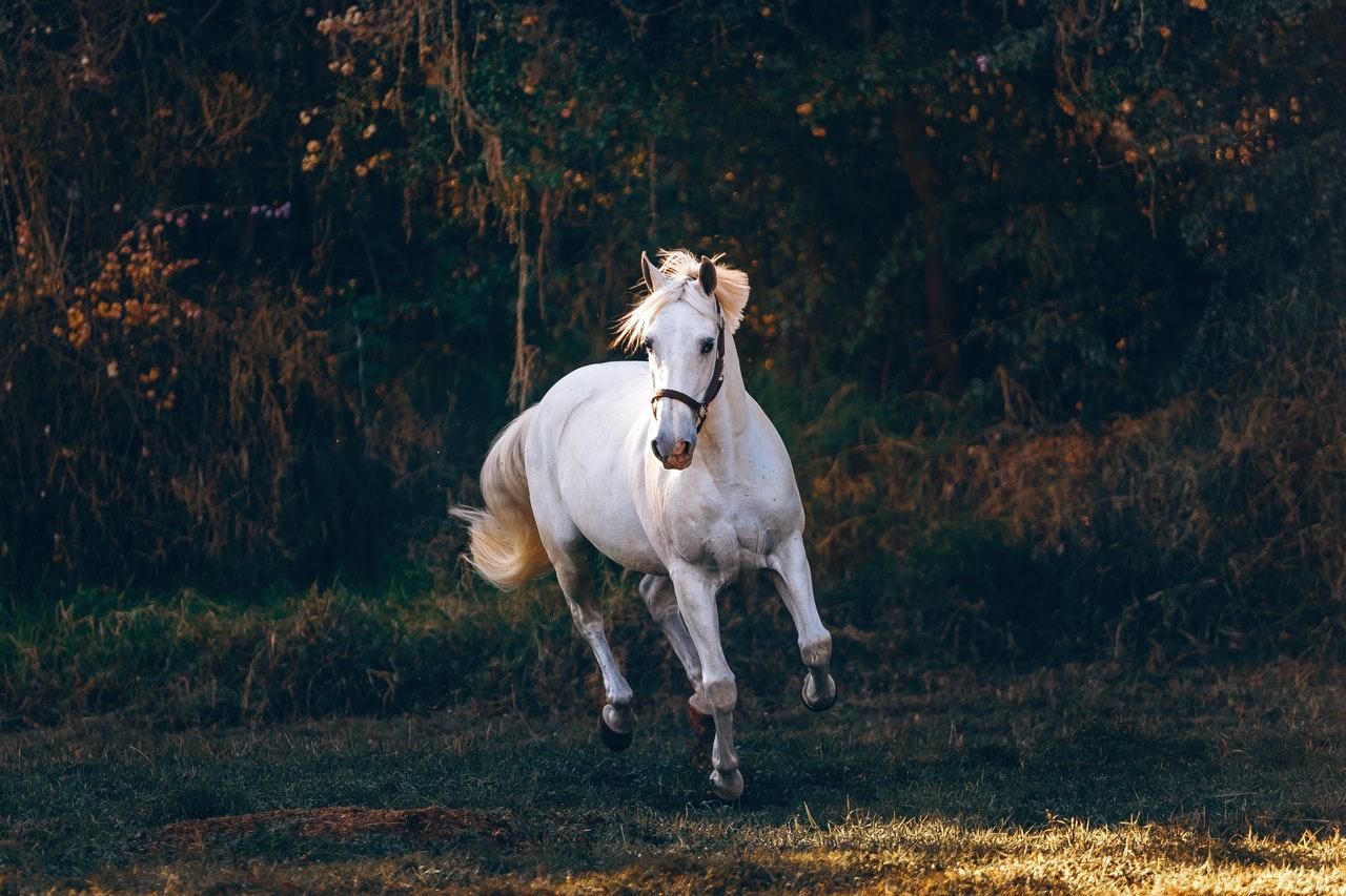 Equestrian Center for Sale in Boulder