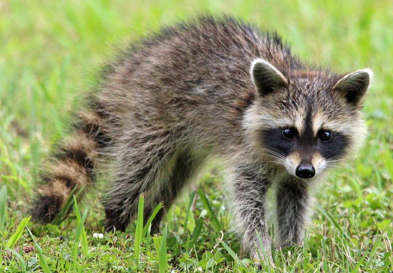 Wildlife Removal Business for Sale – Mountain Communities