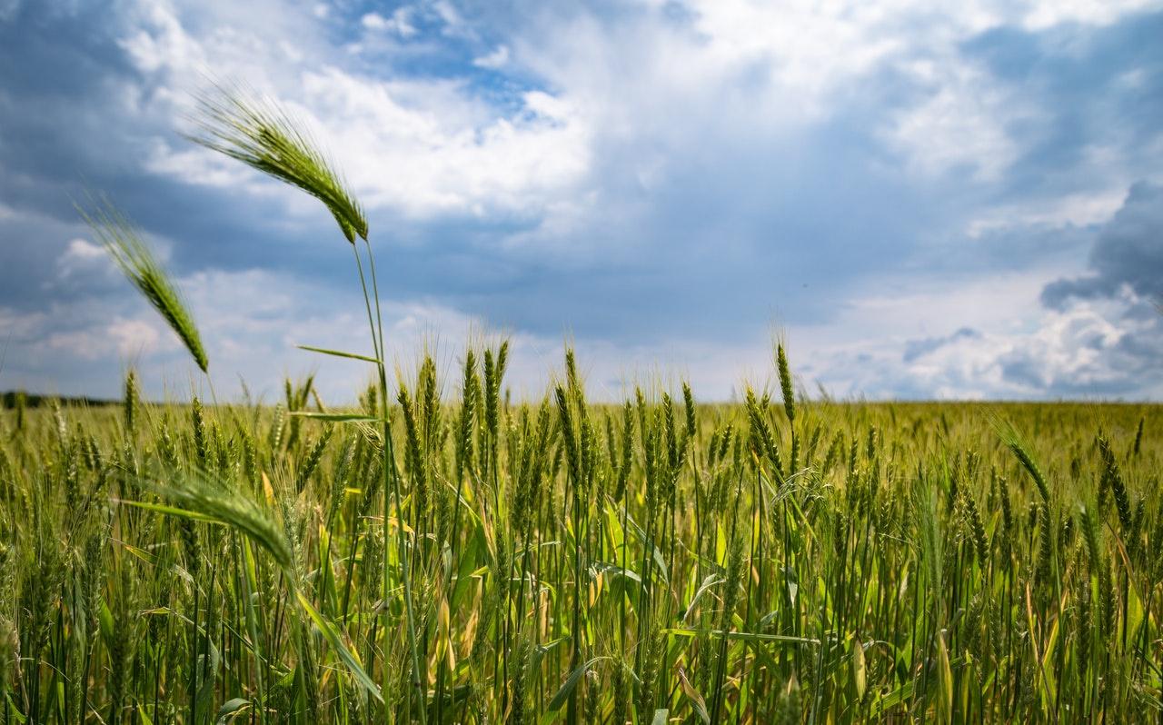 Organic Fertilizer & Distribution Business for Sale