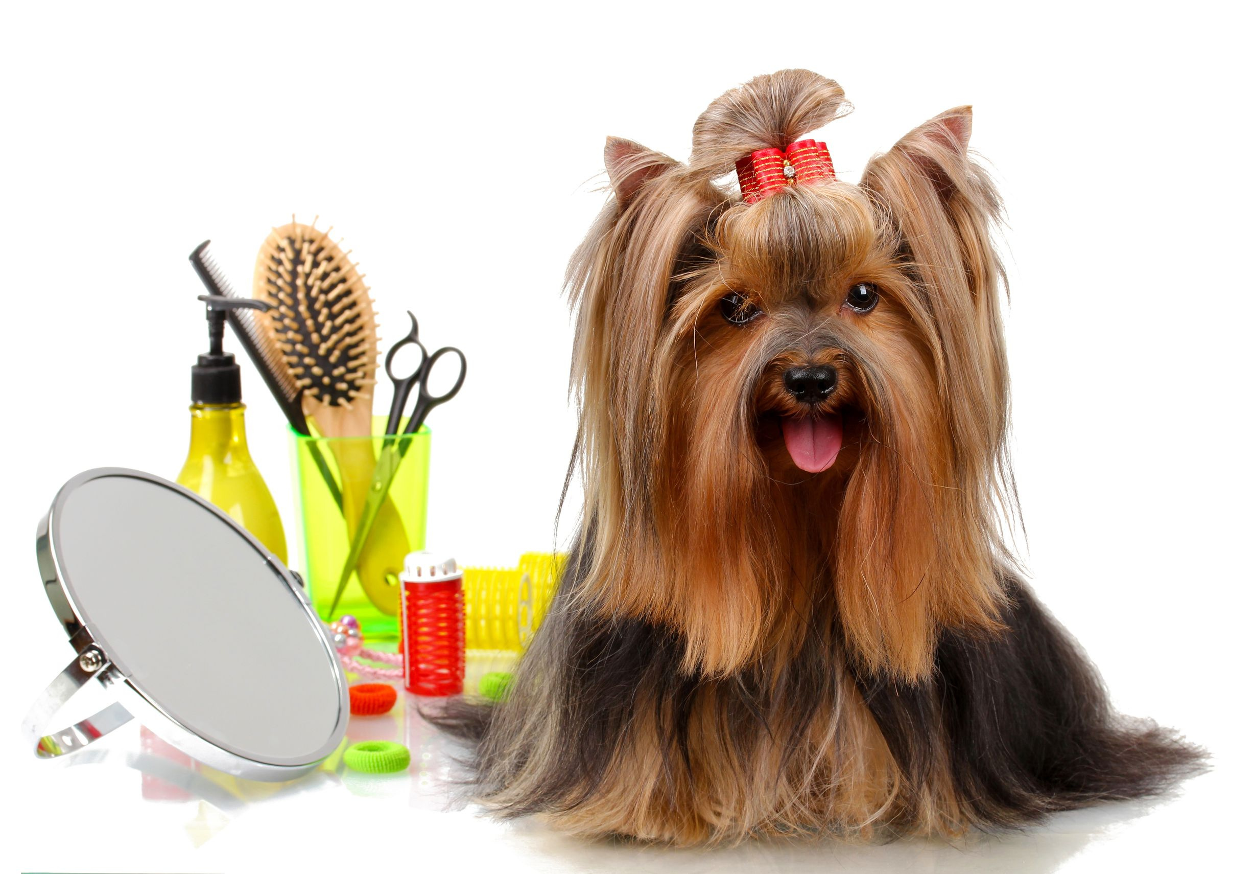 Upscale Full Service Dog Grooming Boutique