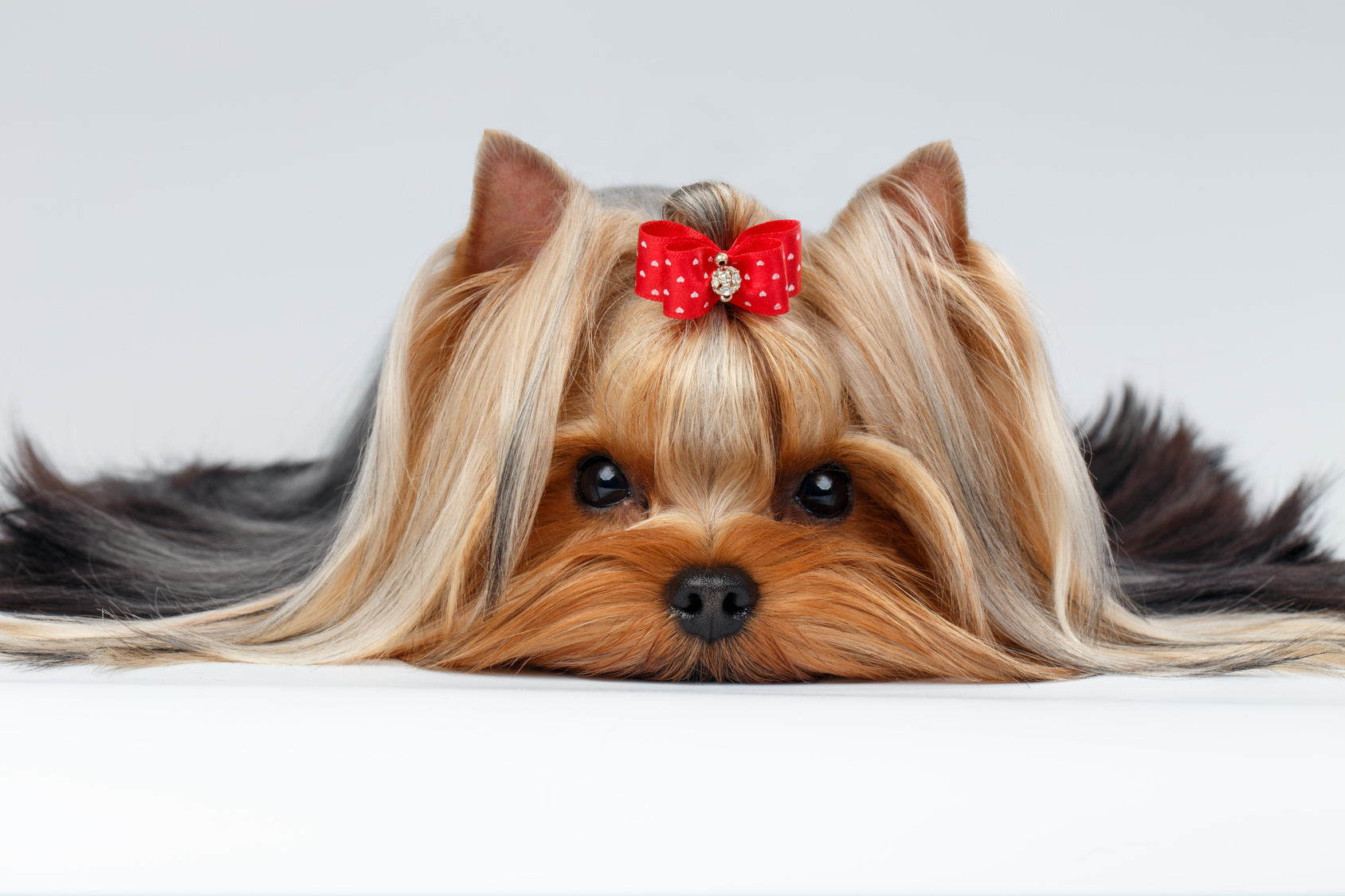 Full-Service Pet Grooming Business - Manager In Place