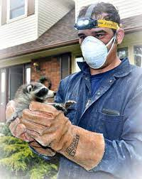 Rapidly Growing Pest Control and Wildlife Removal Business