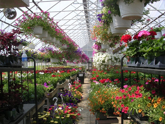 Rare opportunity to own a 60 year old successful and profitable nursery business