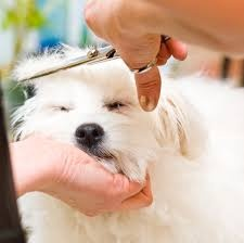 Mobile Pet Grooming Business For Sale
