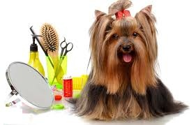 Profitable Pet Grooming Salon