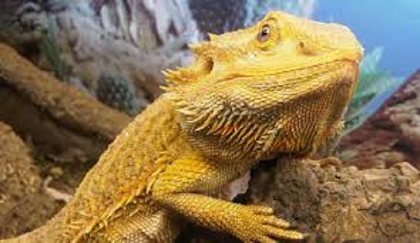 Reptiles, Reptiles, Reptiles