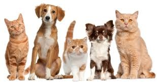 Home Based Pet Sitting Business In Affluent Lower Westchester