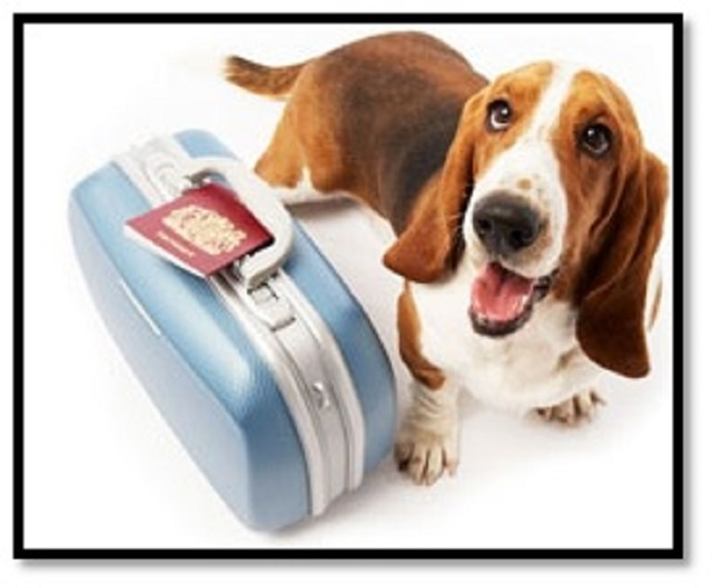 FUN PET DAYCARE & BOARDING BUSINESS FOR SALE!
