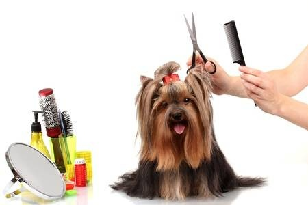 Pet Grooming, Boarding, Day Care and Portrait Studio