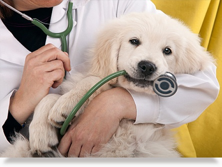 Profitable, AAHA Designated Animal Hospital w/ Real Estate