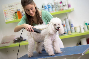 Pet Spa Available in Excellent Modesto Location