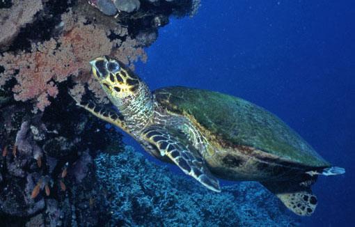 Ocean Forecasting Service