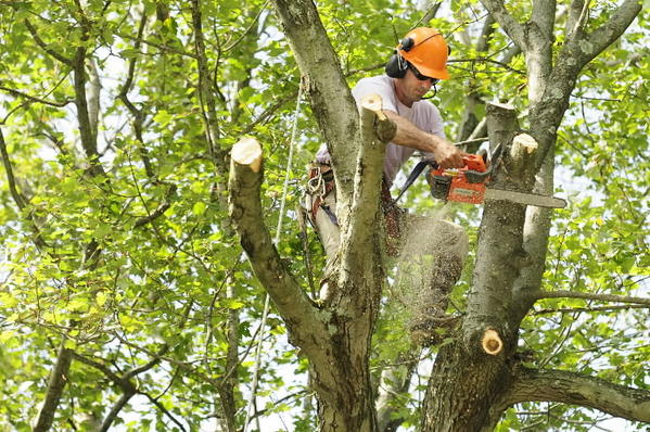 Tree Service with Diversified Clients