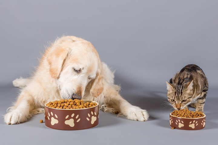 Pet Care - Healthy Food for Your Pet