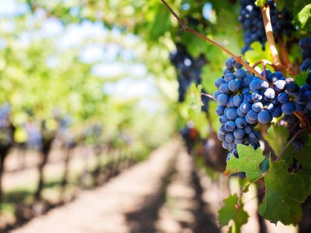 Organic Pesticide and Fertilizer e-Commerce