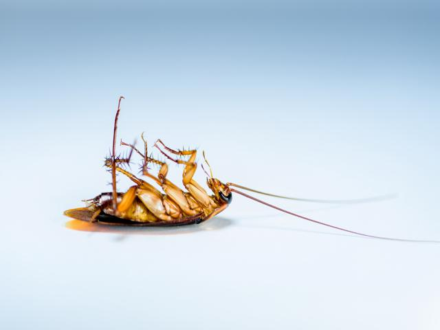 Large Pest Control Business