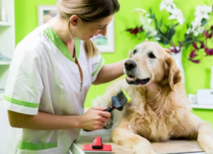 20+ Years, Profitable Pet Grooming - Fully Equipped