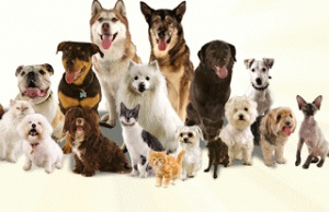 Profitable Pet Hotel Commercial Property-Only the Best Will Do!
